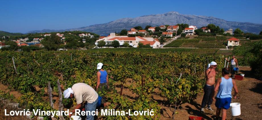 Lovrić Winery, Grk white wine